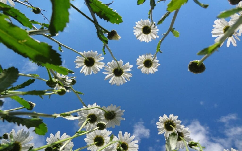 Planter og vejr – herlig kombination